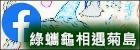 108與綠蠵龜相遇在菊島